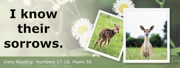 http://bibletruthpublishers.com/ComfortOfScriptures/wp-content/uploads/cos-hdg-2014-129.jpg