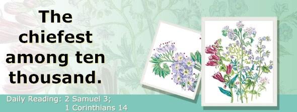 http://bibletruthpublishers.com/ComfortOfScriptures/wp-content/uploads/cos-hdg-2015-252.jpg