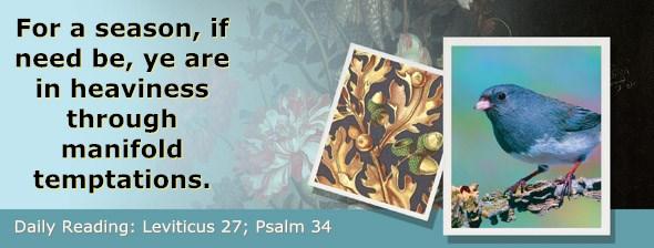 http://bibletruthpublishers.com/ComfortOfScriptures/wp-content/uploads/cos-hdg-2017-113.jpg