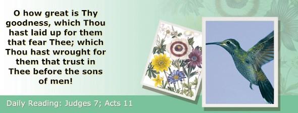 http://bibletruthpublishers.com/ComfortOfScriptures/wp-content/uploads/cos-hdg-2017-205.jpg