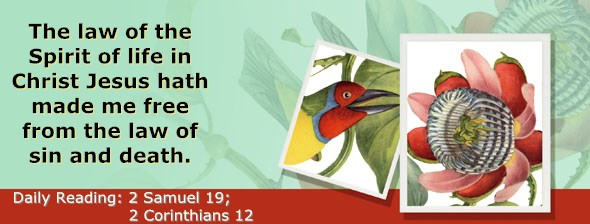 https://bibletruthpublishers.com/ComfortOfScriptures/wp-content/uploads/cos-hdg-2017-266.jpg