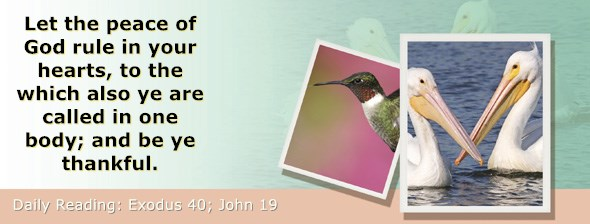 https://bibletruthpublishers.com/ComfortOfScriptures/wp-content/uploads/cos-hdg-2019-088.jpg