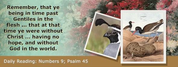 https://bibletruthpublishers.com/ComfortOfScriptures/wp-content/uploads/cos-hdg-2019-122.jpg
