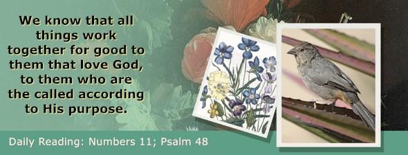 https://bibletruthpublishers.com/ComfortOfScriptures/wp-content/uploads/cos-hdg-2019-124.jpg