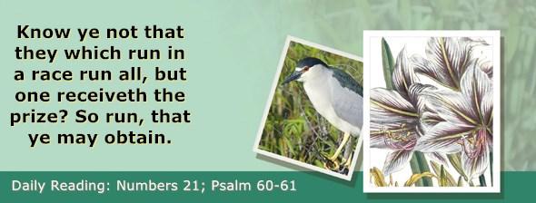 https://bibletruthpublishers.com/ComfortOfScriptures/wp-content/uploads/cos-hdg-2019-132.jpg