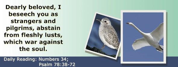 https://bibletruthpublishers.com/ComfortOfScriptures/wp-content/uploads/cos-hdg-2019-145.jpg