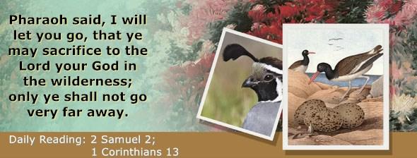 https://bibletruthpublishers.com/ComfortOfScriptures/wp-content/uploads/cos-hdg-2021-251.jpg