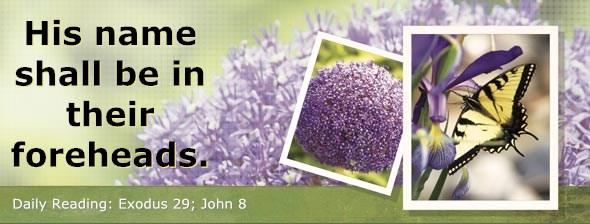 http://bibletruthpublishers.com/DailyLight/wp-content/uploads/dl-hdg-2014-154.jpg