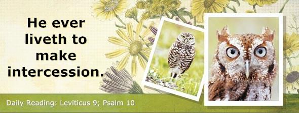 http://bibletruthpublishers.com/DailyLight/wp-content/uploads/dl-hdg-2014-191.jpg