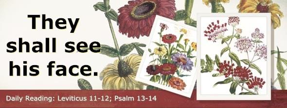 http://bibletruthpublishers.com/DailyLight/wp-content/uploads/dl-hdg-2014-196.jpg