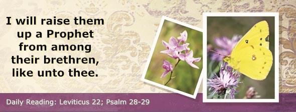 http://bibletruthpublishers.com/DailyLight/wp-content/uploads/dl-hdg-2014-215.jpg