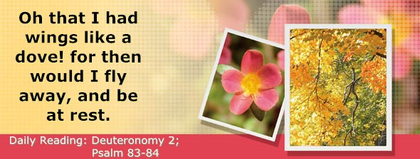 http://bibletruthpublishers.com/DailyLight/wp-content/uploads/dl-hdg-2015-298.jpg