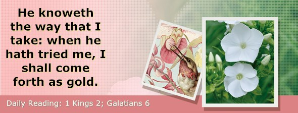 http://bibletruthpublishers.com/DailyLight/wp-content/uploads/dl-hdg-2015-545.jpg