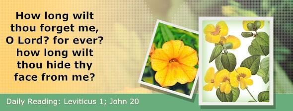 http://bibletruthpublishers.com/DailyLight/wp-content/uploads/dl-hdg-2016-180.jpg