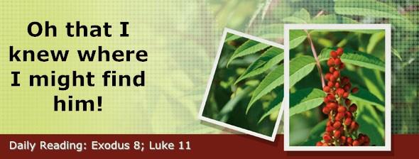 http://bibletruthpublishers.com/DailyLight/wp-content/uploads/dl-hdg-2017-112.jpg