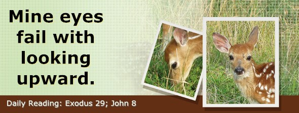 http://bibletruthpublishers.com/DailyLight/wp-content/uploads/dl-hdg-2017-153.jpg