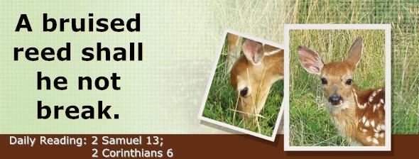 https://bibletruthpublishers.com/DailyLight/wp-content/uploads/dl-hdg-2017-519.jpg