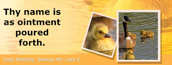 https://bibletruthpublishers.com/DailyLight/wp-content/uploads/dl-hdg-2019-093.jpg