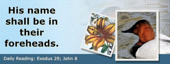 https://bibletruthpublishers.com/DailyLight/wp-content/uploads/dl-hdg-2019-154.jpg