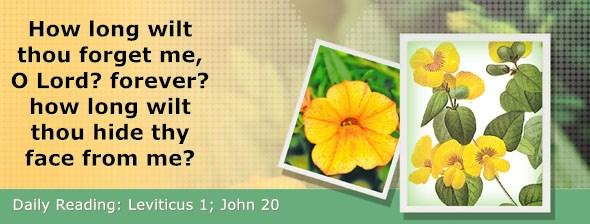 https://bibletruthpublishers.com/DailyLight/wp-content/uploads/dl-hdg-2020-180.jpg