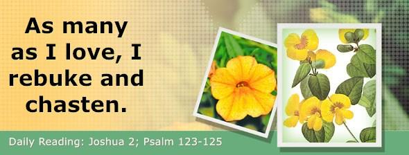 https://bibletruthpublishers.com/DailyLight/wp-content/uploads/dl-hdg-2020-363.jpg