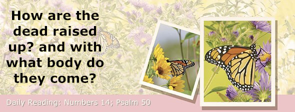 https://bibletruthpublishers.com/DailyLight/wp-content/uploads/dl-hdg-2021-252.jpg