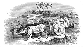 Oriental Cart