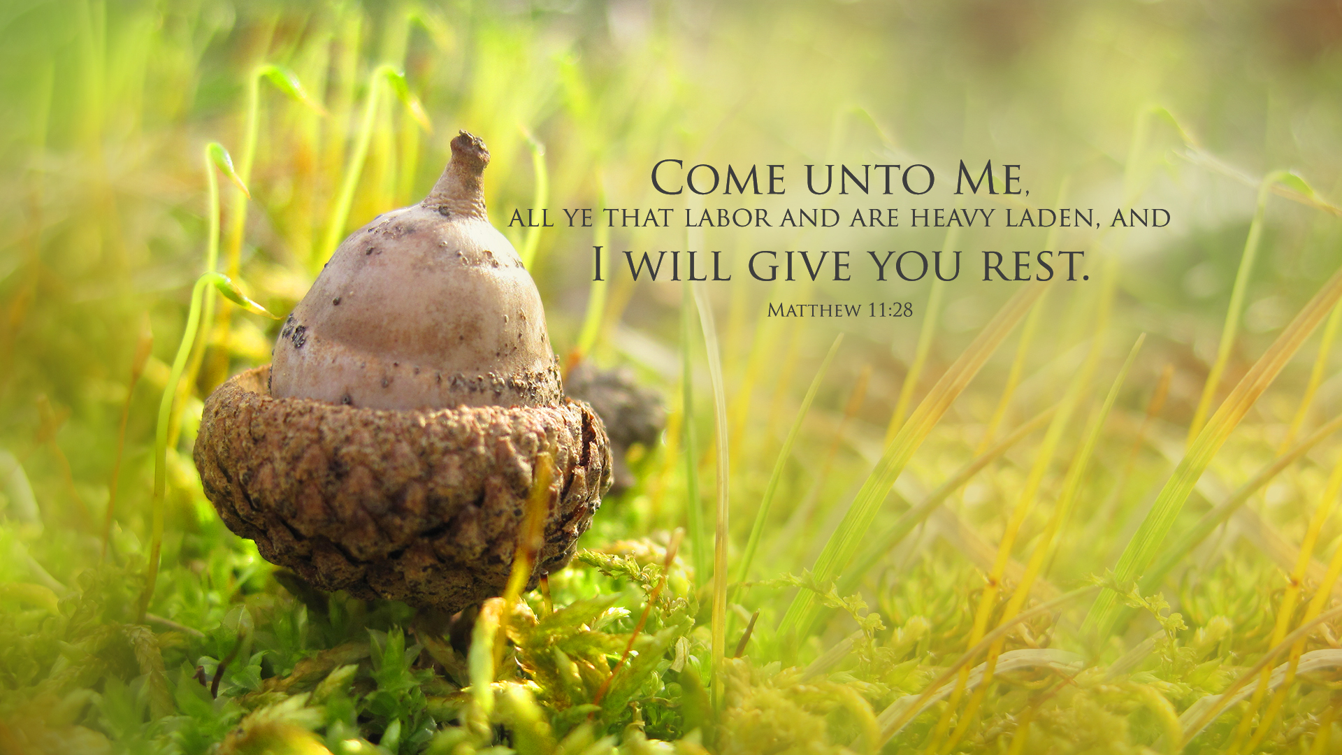 Acorn–Matthew 11:28–Wallpaper