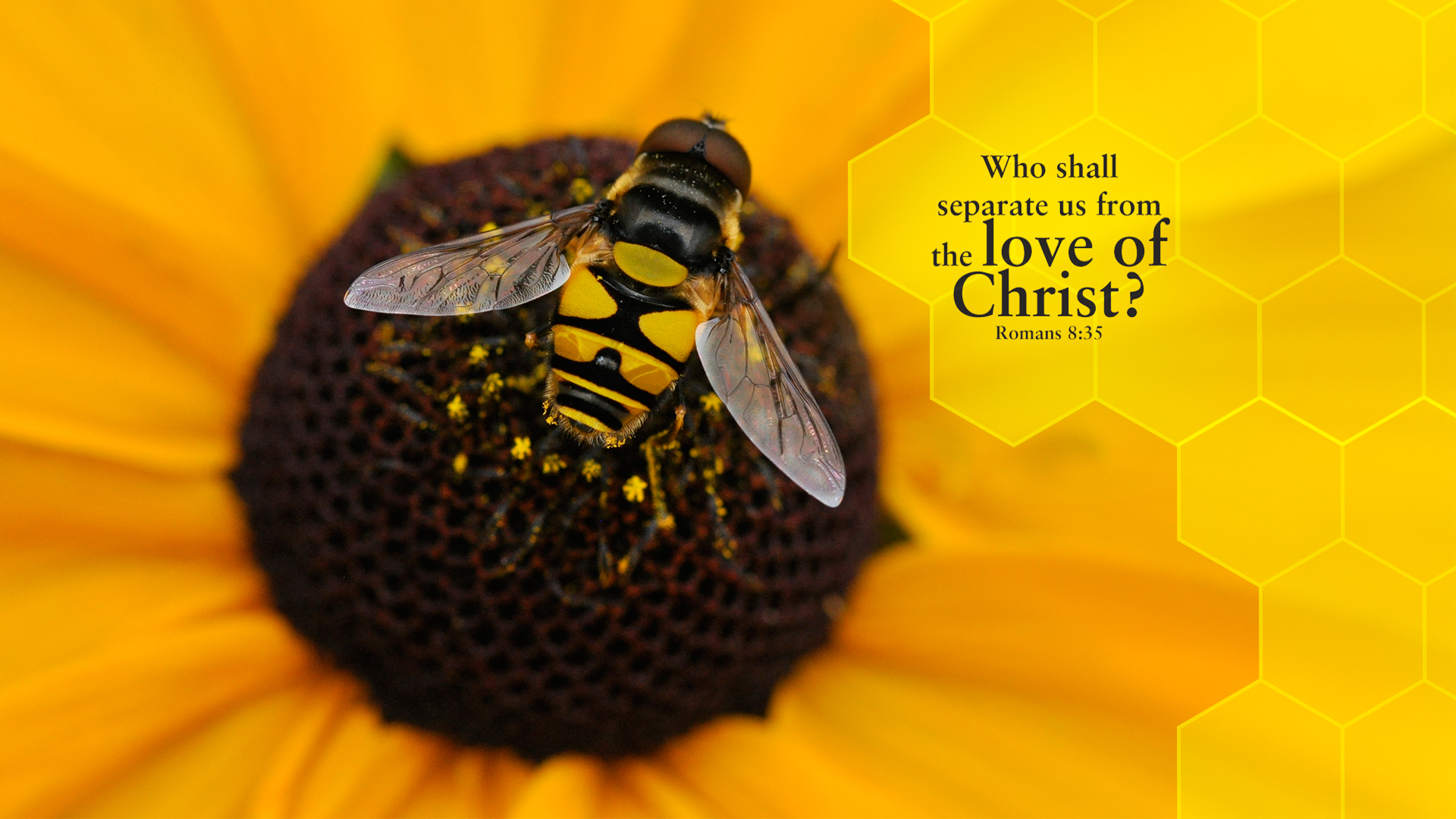 Bee–Romans 8:35–Wallpaper