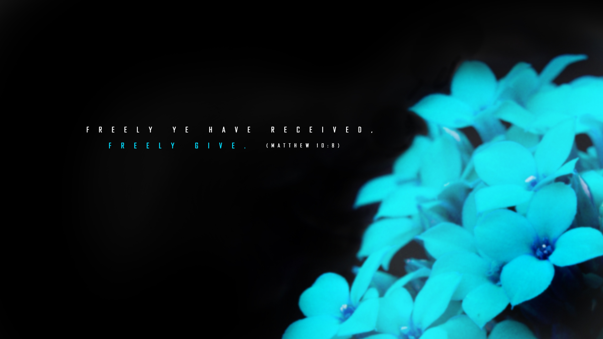 Blue Flower–Matthew 10:8–Wallpaper