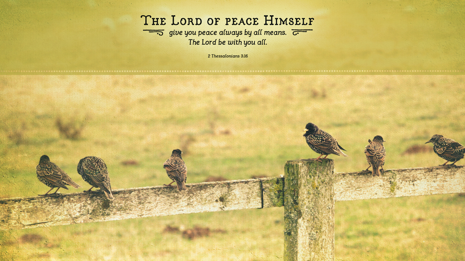 Birds on Fence–2 Thessalonians 3:16–Wallpaper
