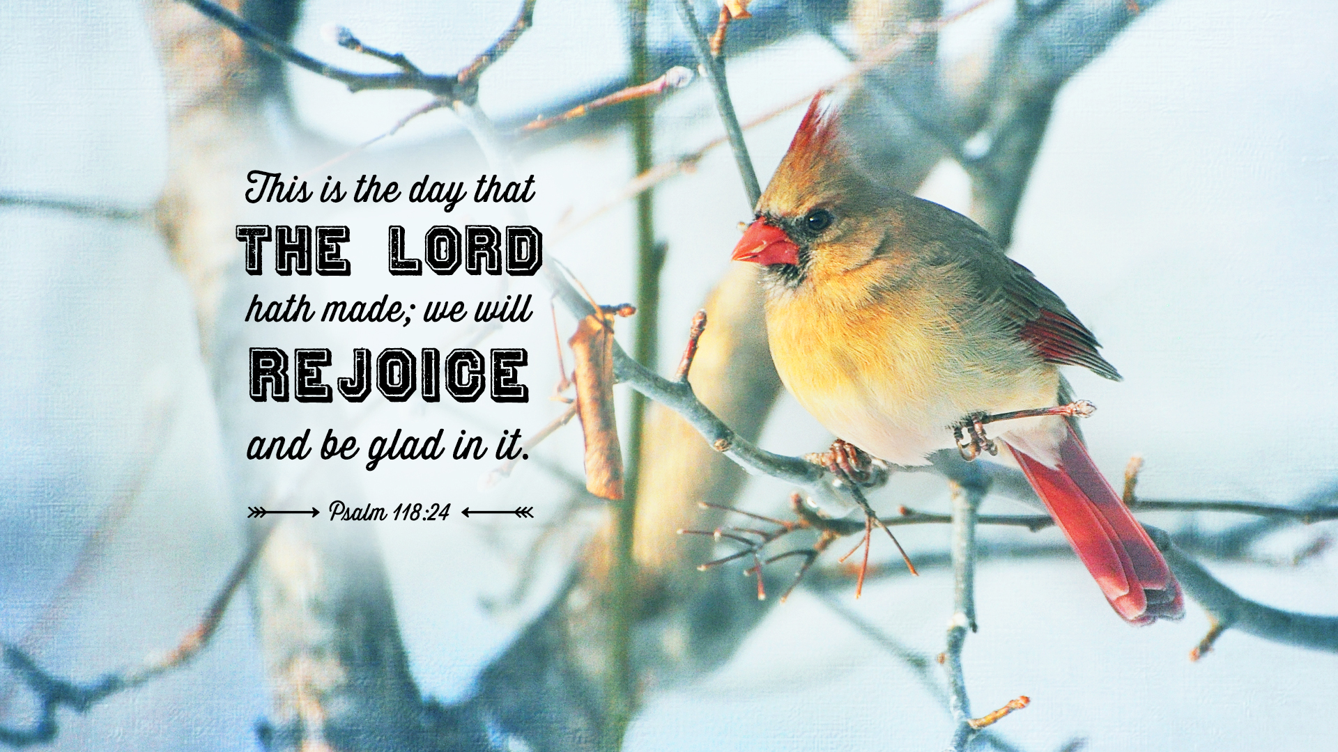 Cardinal-Winter-Psalm 118:24–Wallpaper