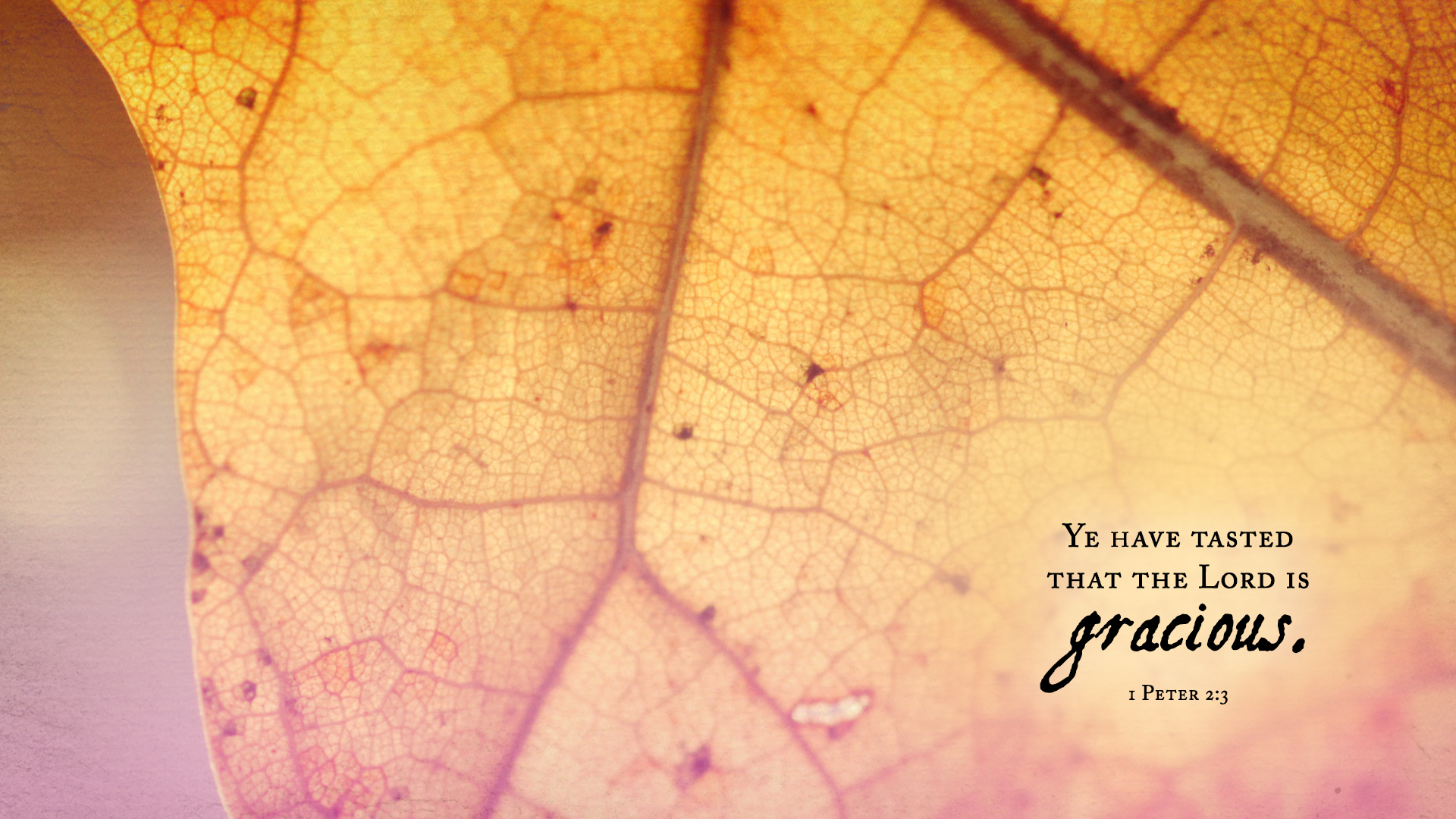Autumn Leaf–1 Peter 2:3–Wallpaper