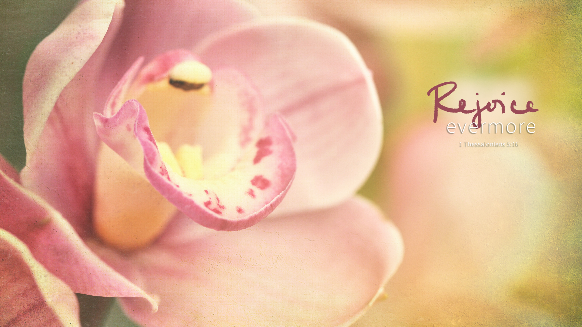 Orchid–1 Thessalonians 5:16–Wallpaper