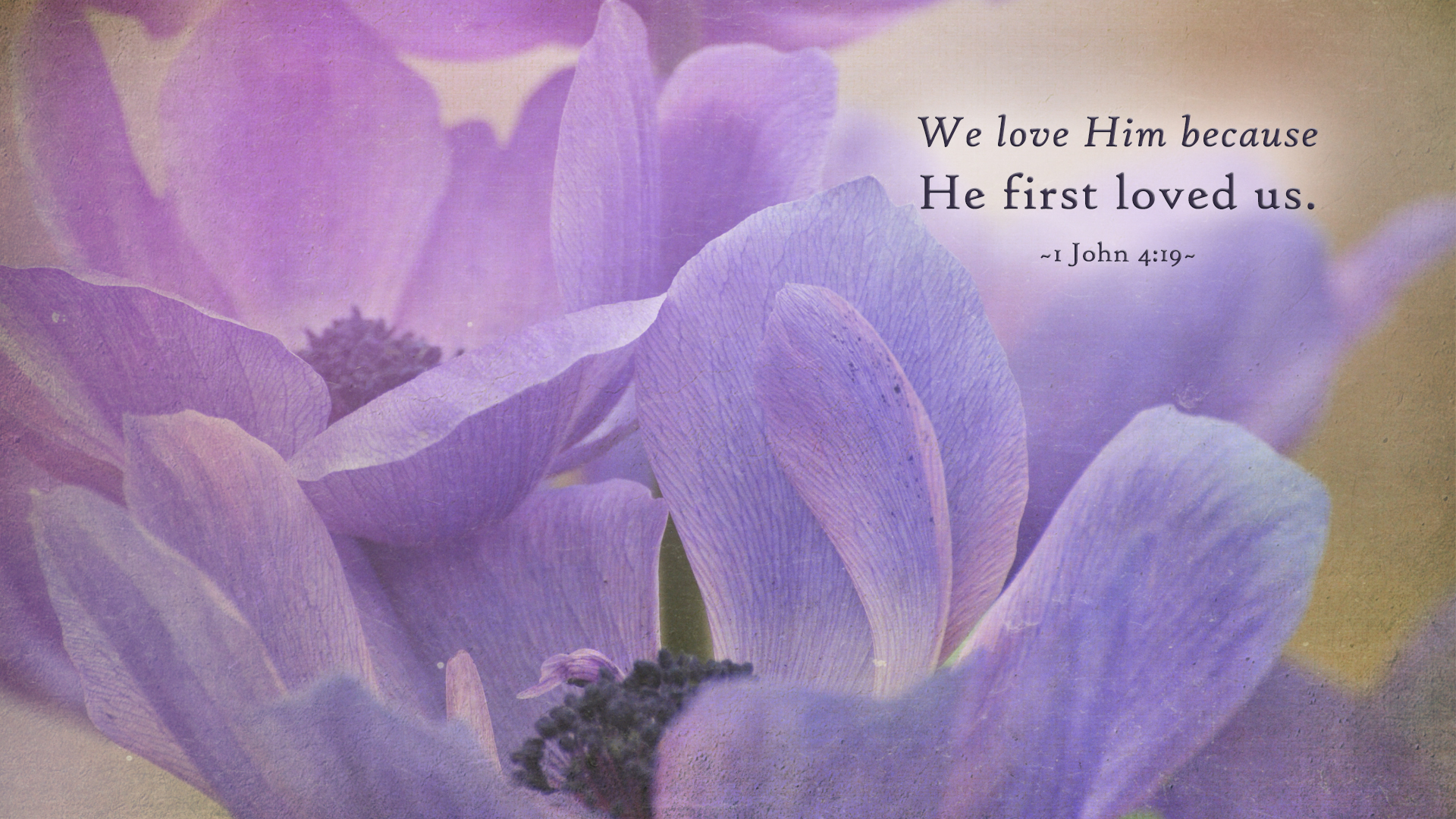 Purple Flower–1 John 4:19–Wallpaper