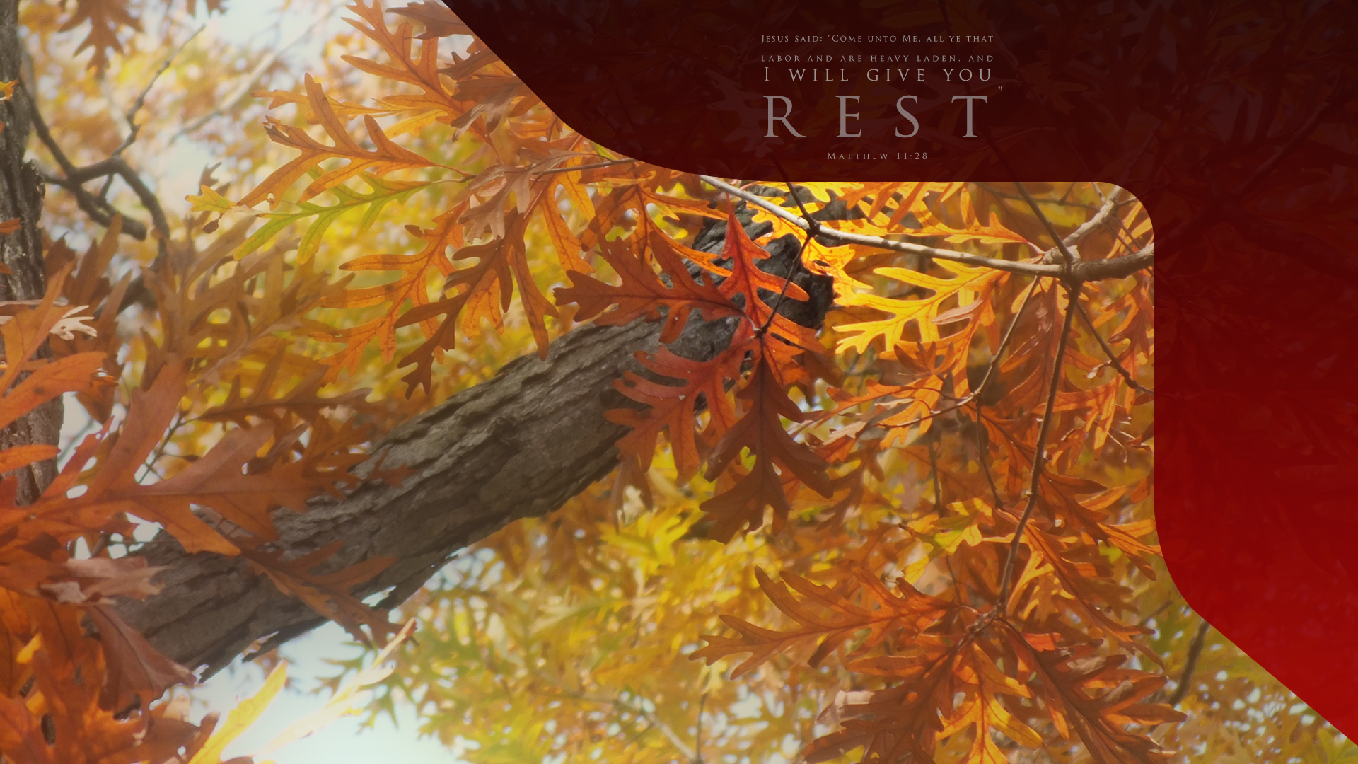 Fall Leaves Rest–Matthew 11:28–Wallpaper