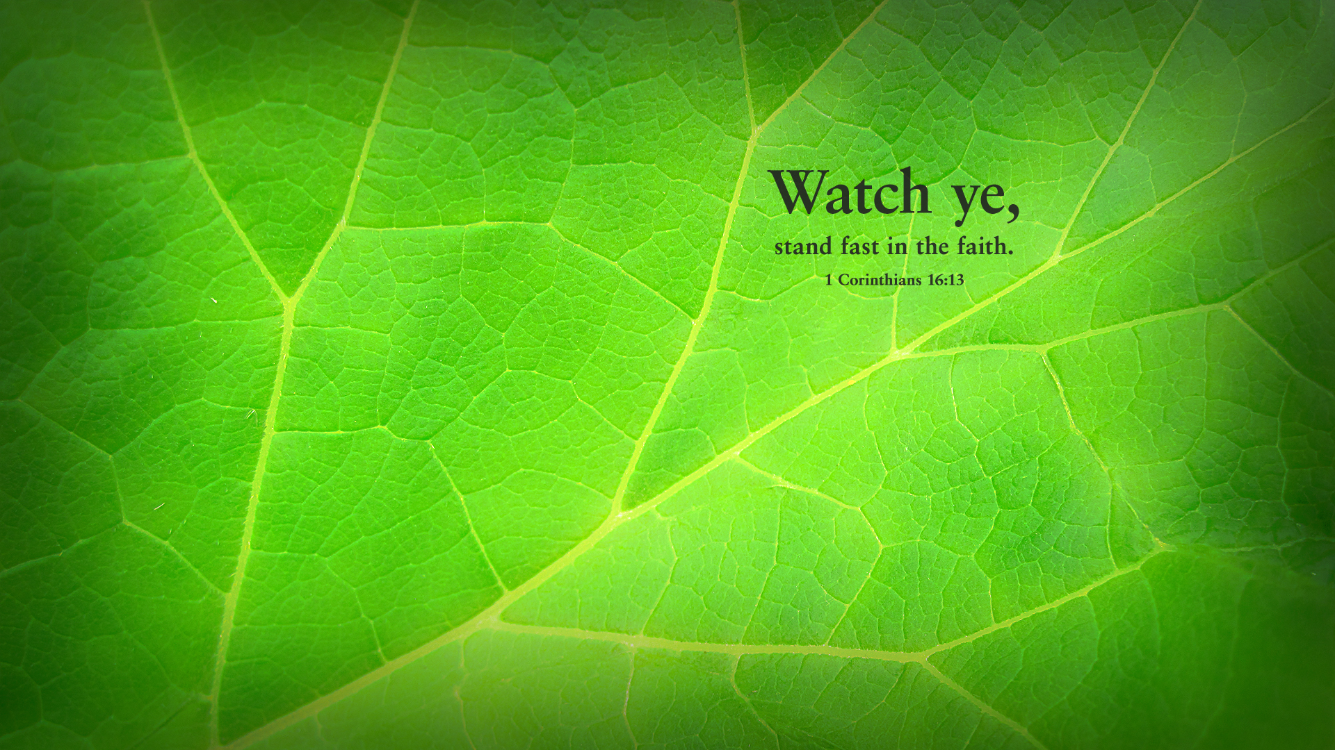 Green Leaf–1 Corinthians 16:13–Wallpaper