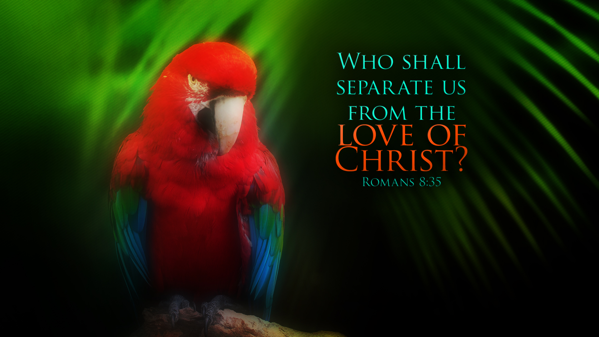 Macaw–Romans 8:35–Wallpaper