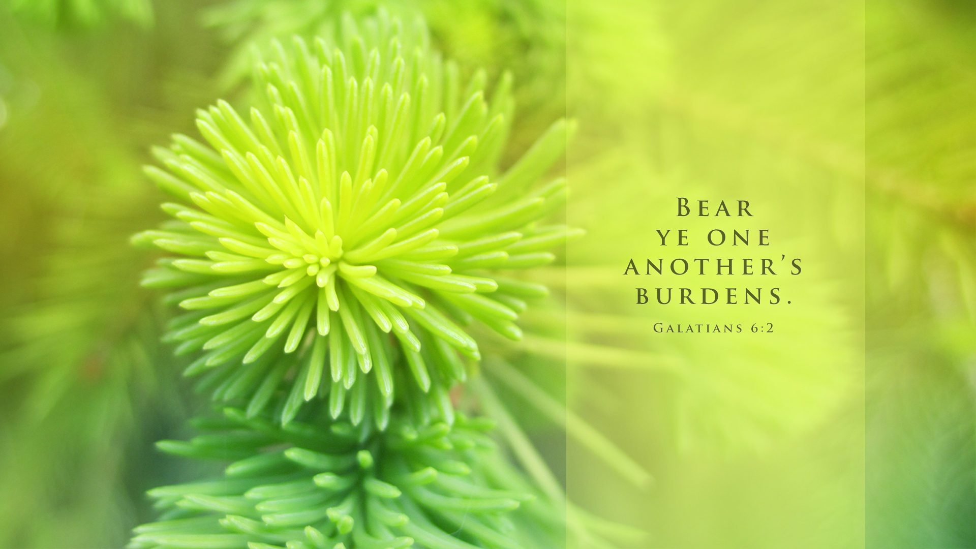 Pine Needles–Galatians 6:2–Wallpaper