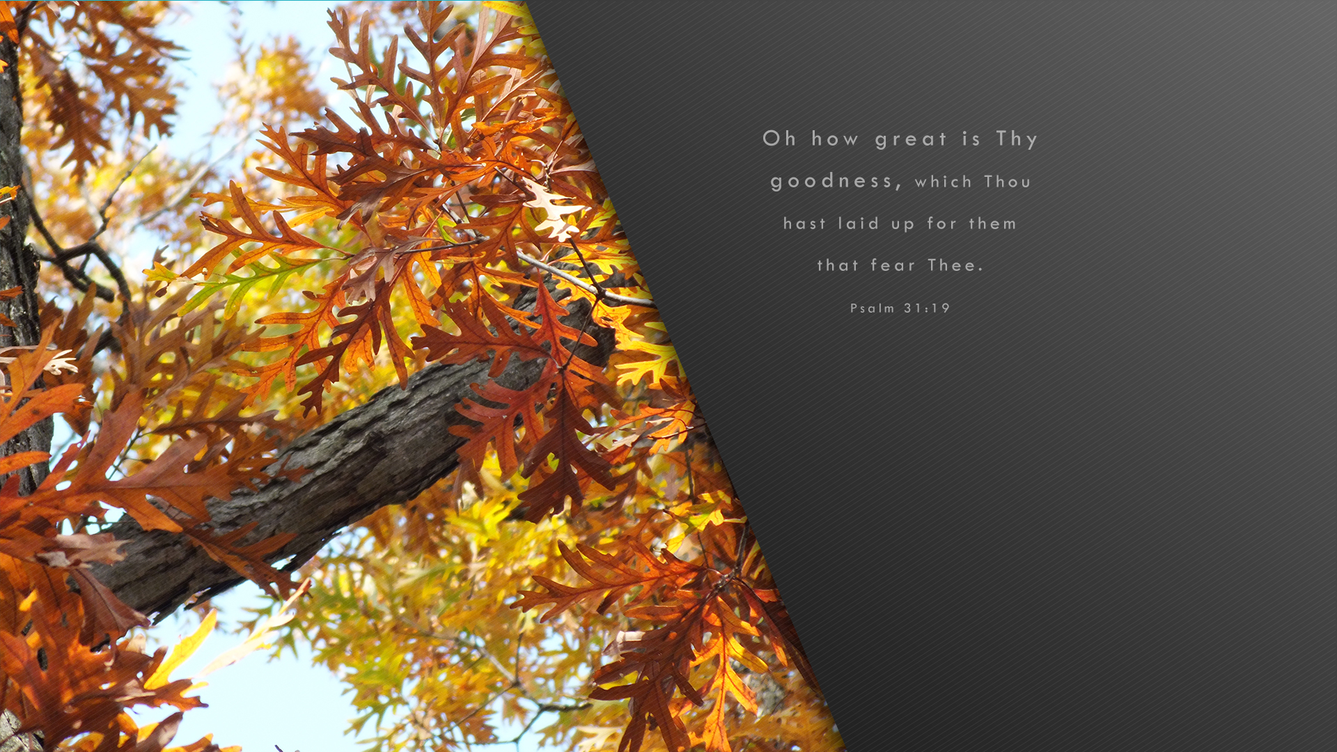 Oak Autumn–Psalm 31:19–Wallpaper
