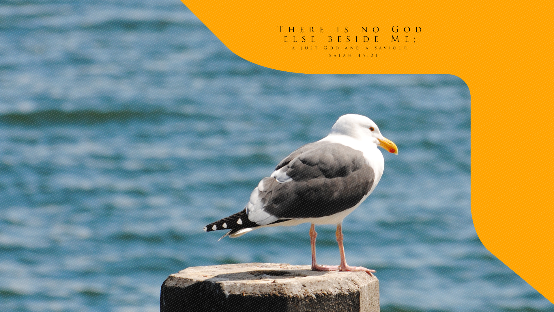 Summer Seagull–Isaiah 45:21–Wallpaper