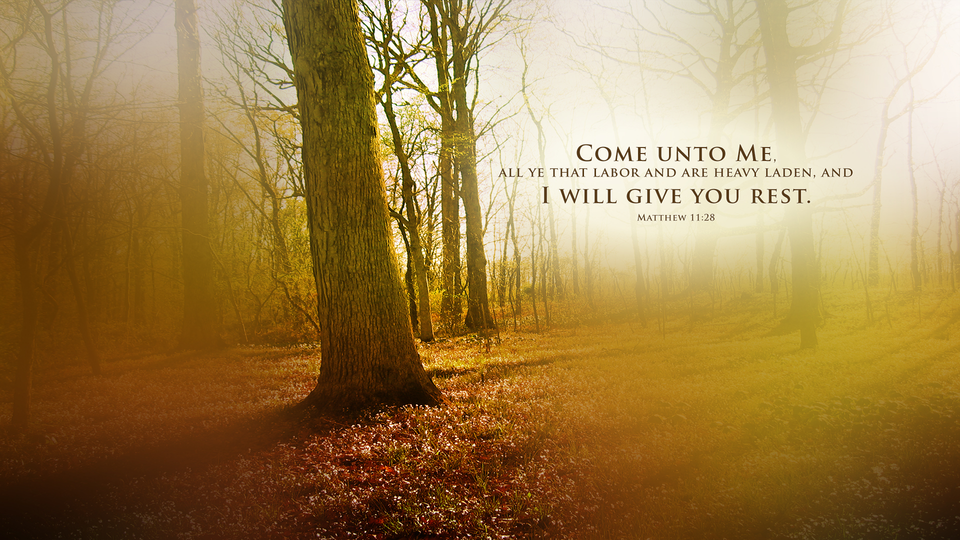 Sunset Forest–Matthew 11:28–Wallpaper