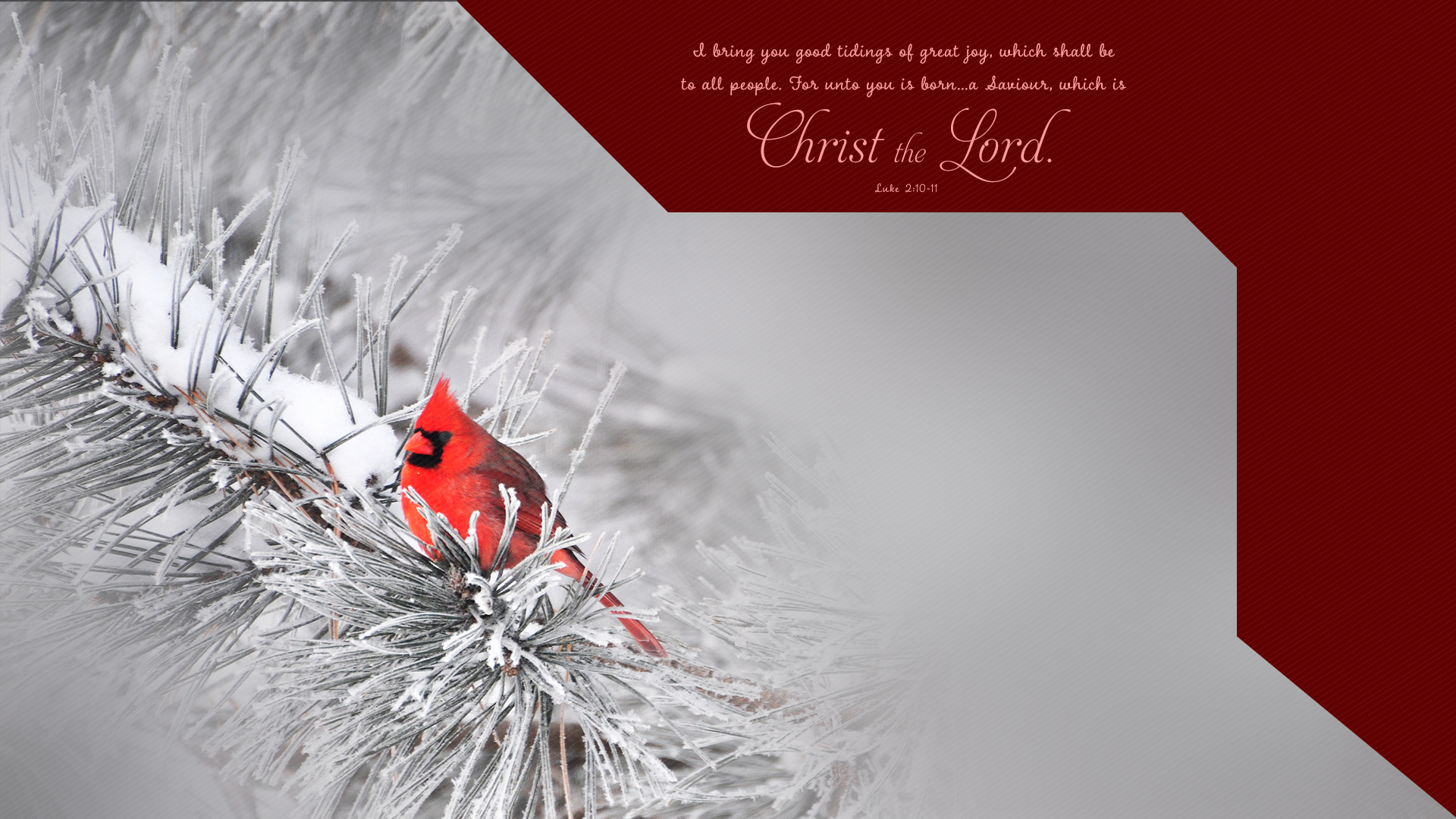 Winter Cardinal–Luke 2:10-11–Wallpaper
