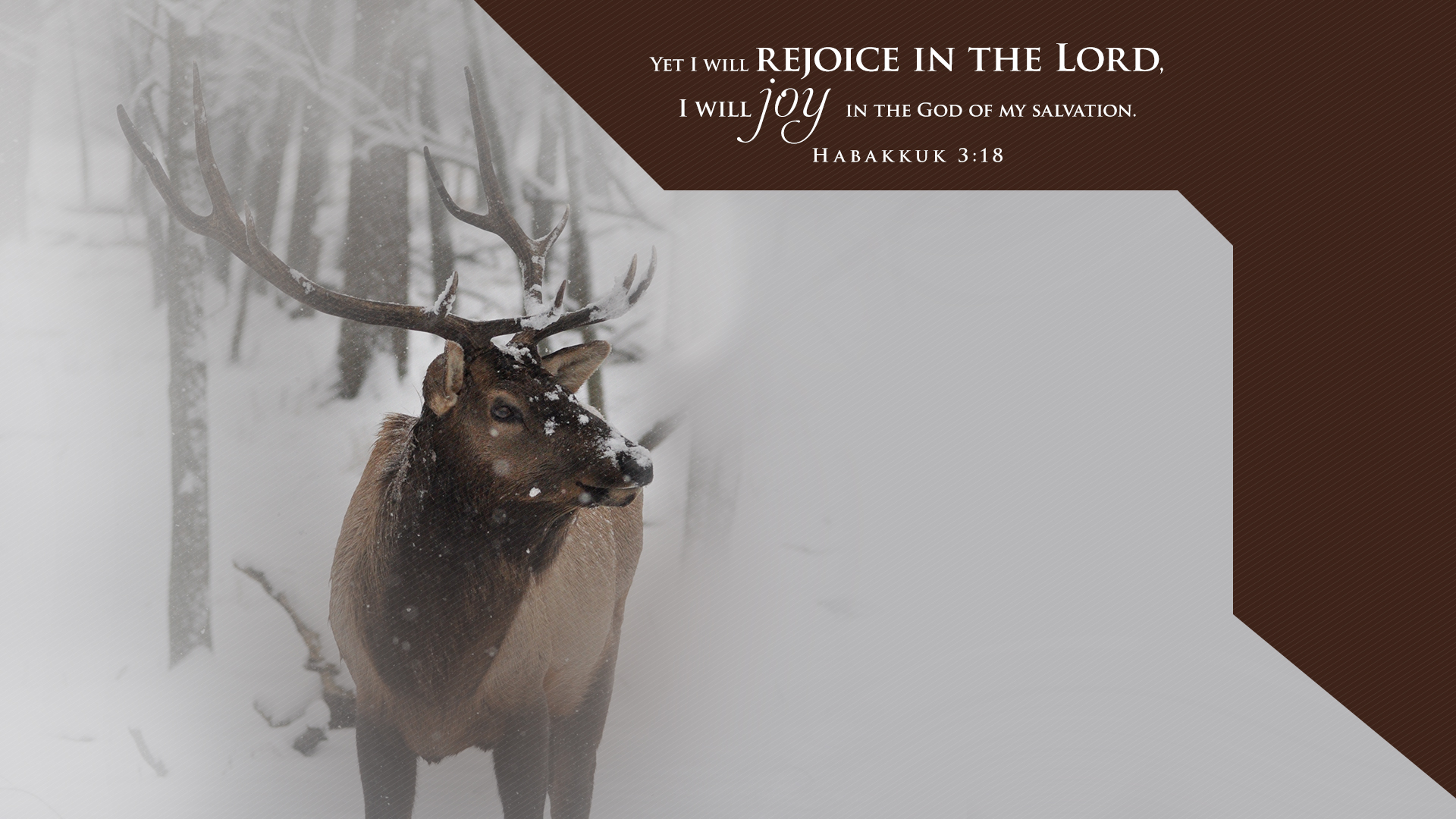 Winter Elk–Habakkuk 3:18–Wallpaper