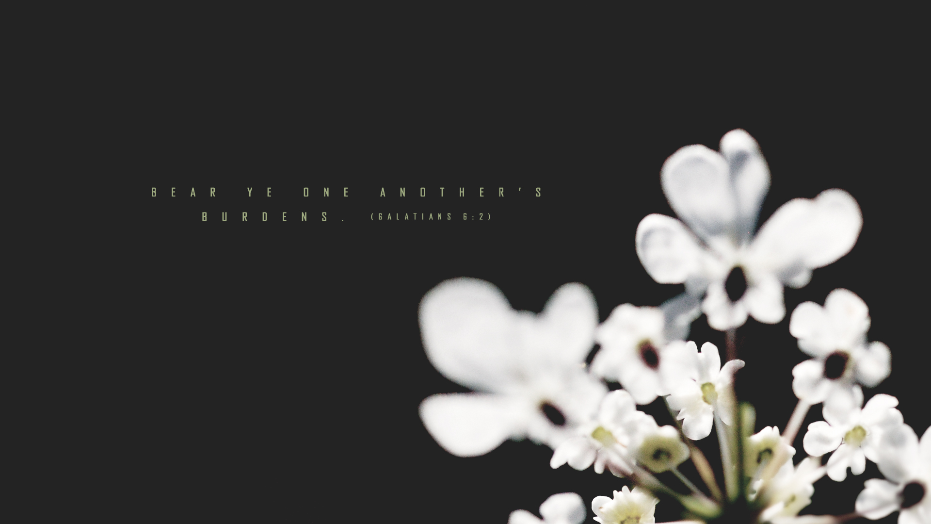 White Flowers–Galatians 6:2–Wallpaper