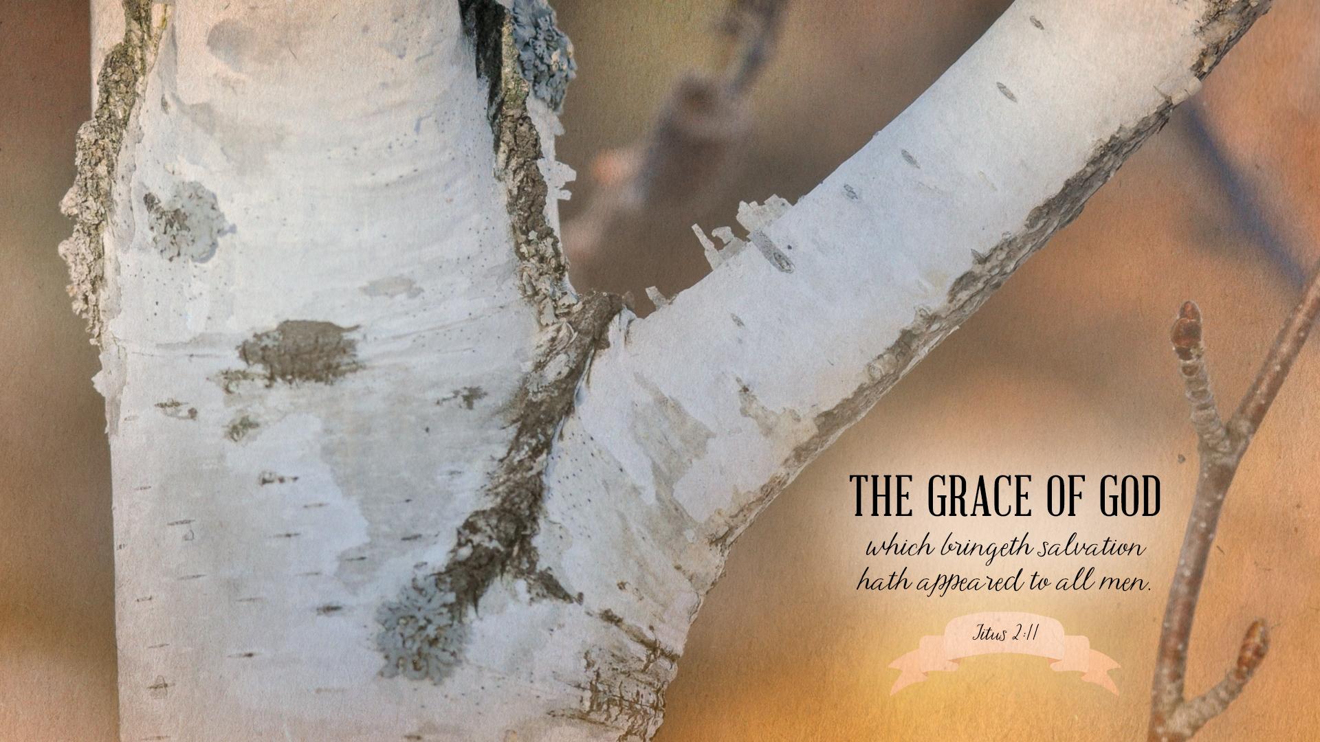 Birch–Titus 2:11–Wallpaper